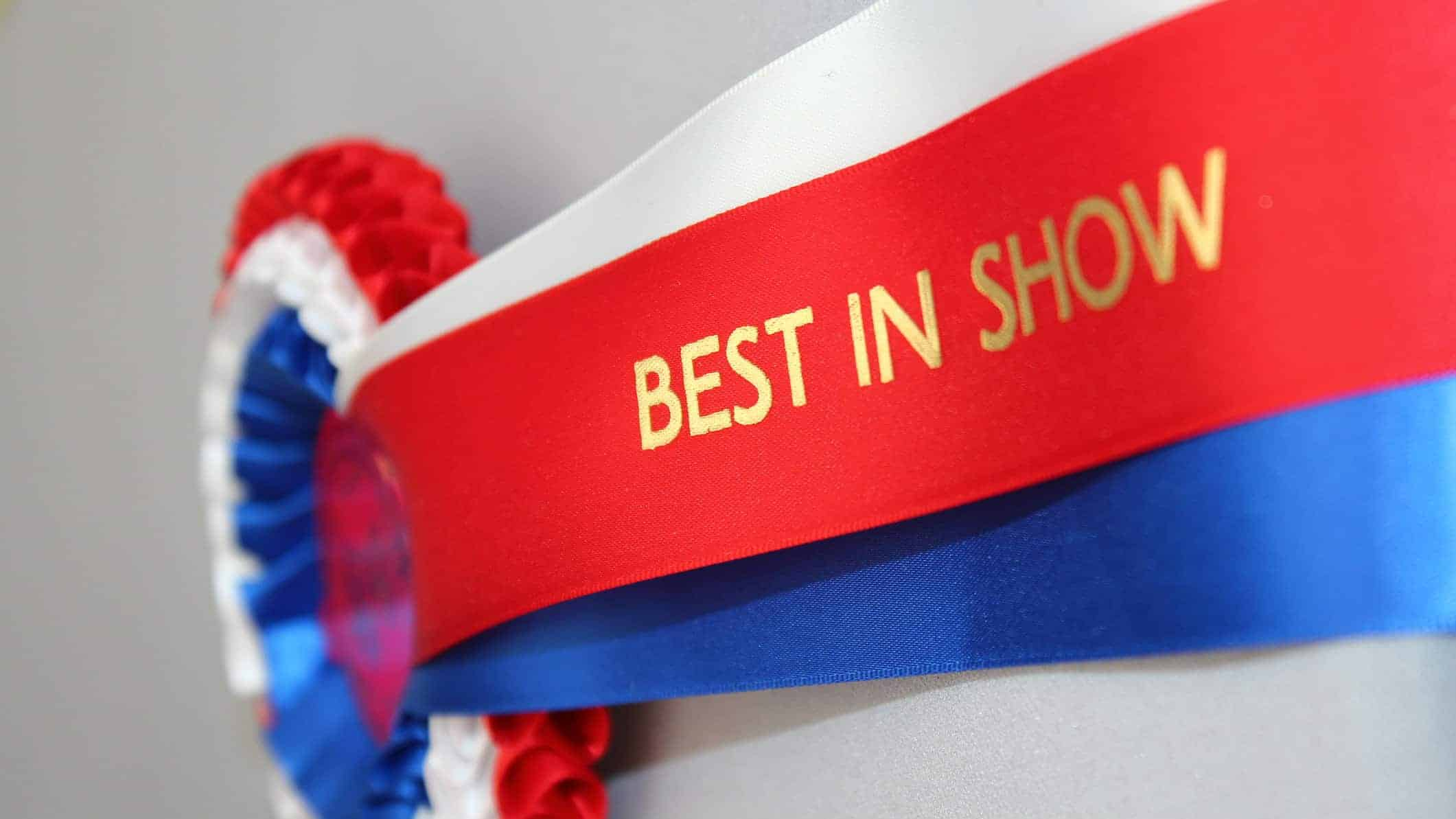 best asx shares represented by best in show ribbon