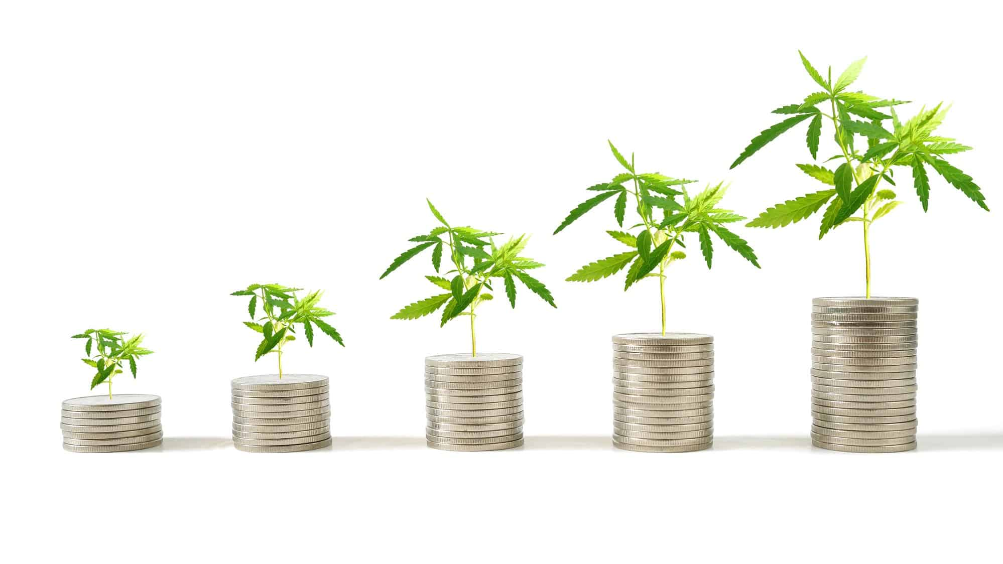 increasing cannabis asx share price represented by growing coin piles with cannabis plants on top