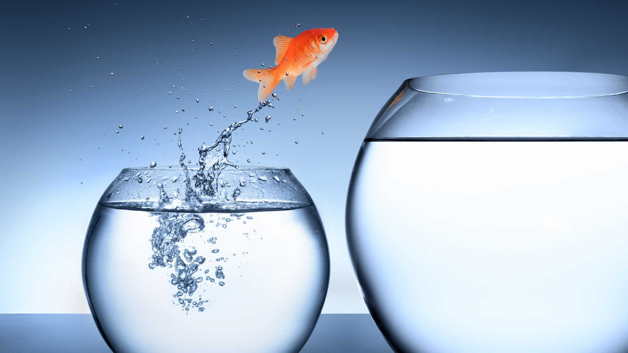 Share price jump represented by goldfish leaping from small fishbowl to larger bowl
