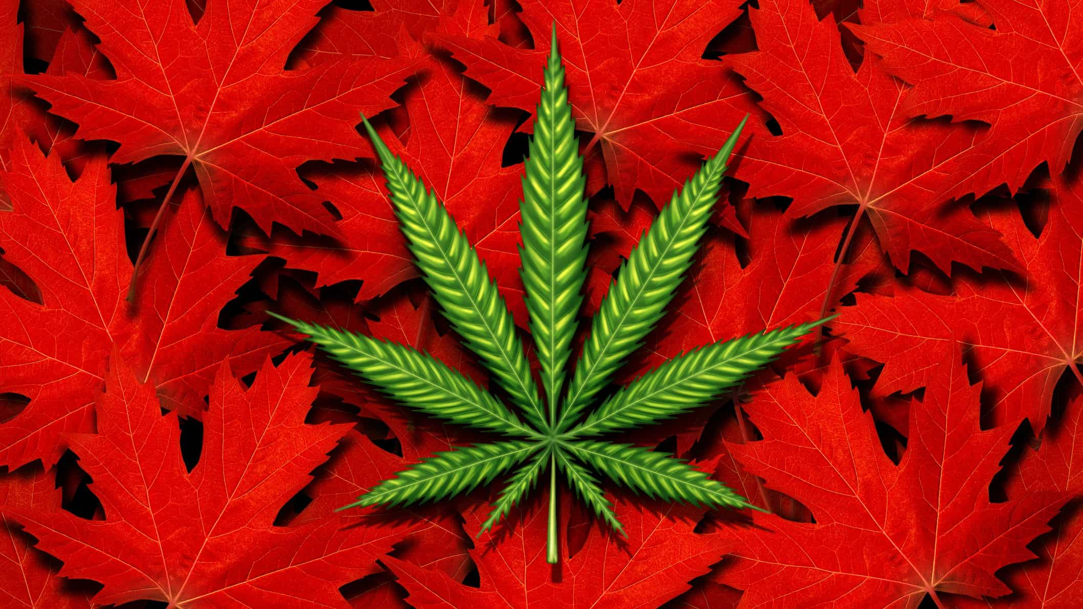 green cannabis leaf representing althea share price sitting atop red maple leaves