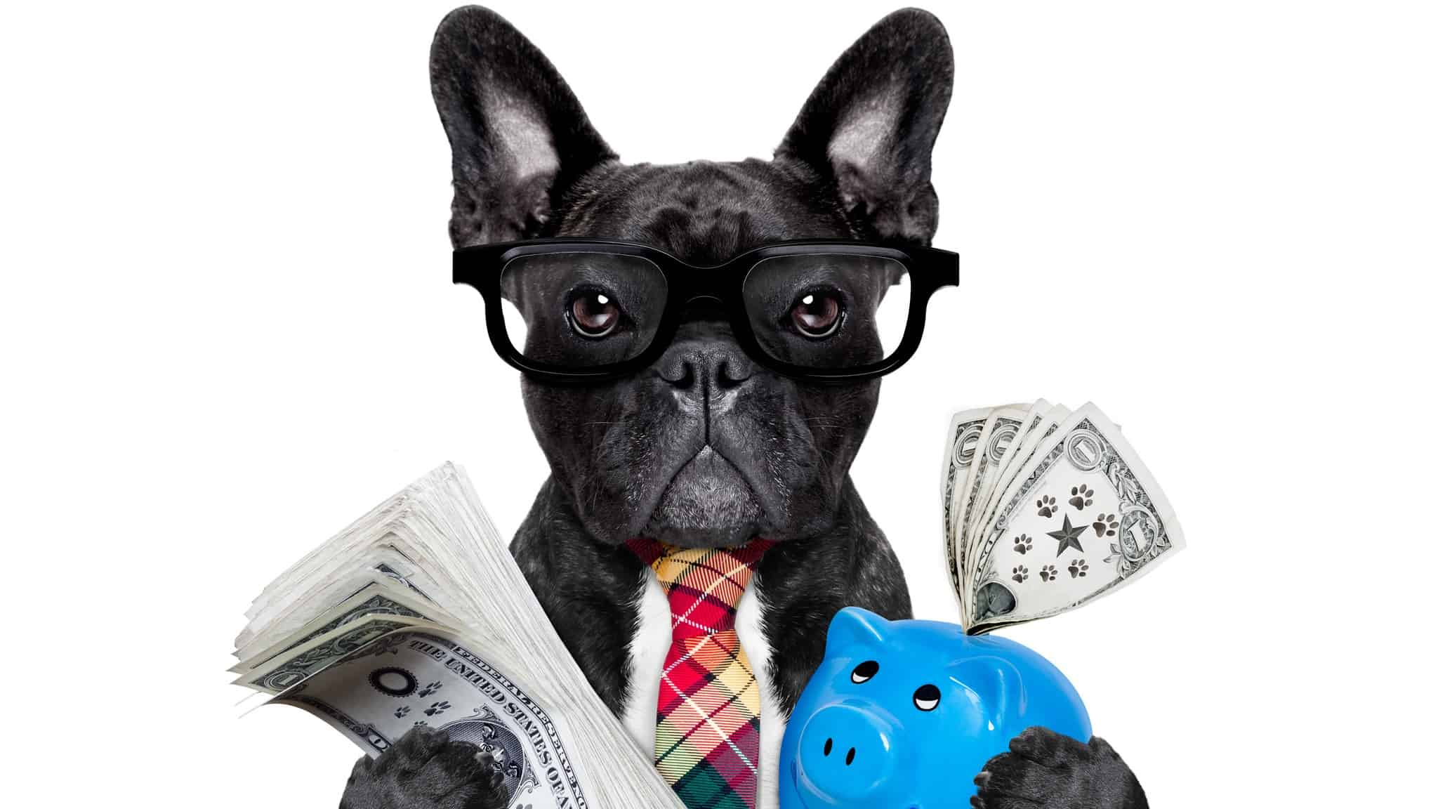 getting growth and cincome from asx shares represented by dog holding cash in one hand and a piggy bank in the other