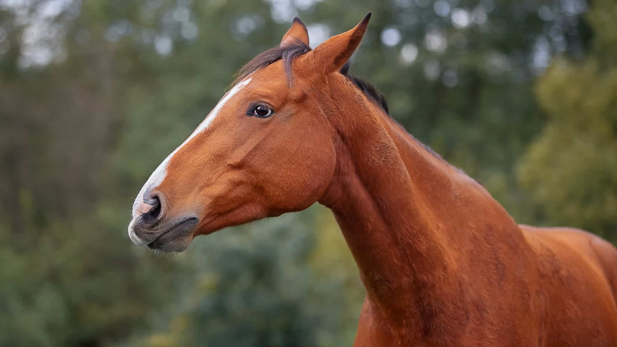 flat betmakers share price represented by sad looking horse