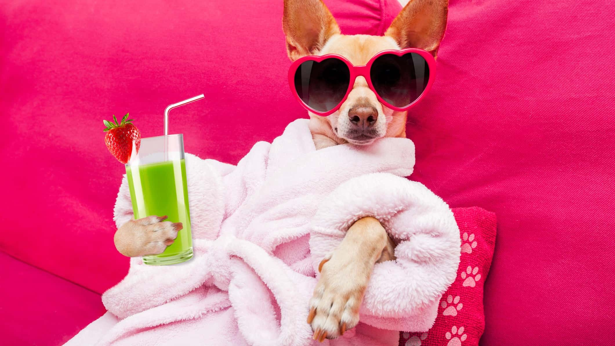 A little dog wearing sunglasses and bathrobe holding a cocktail, indicating a life of luxury enjoying passive income from cheap shares