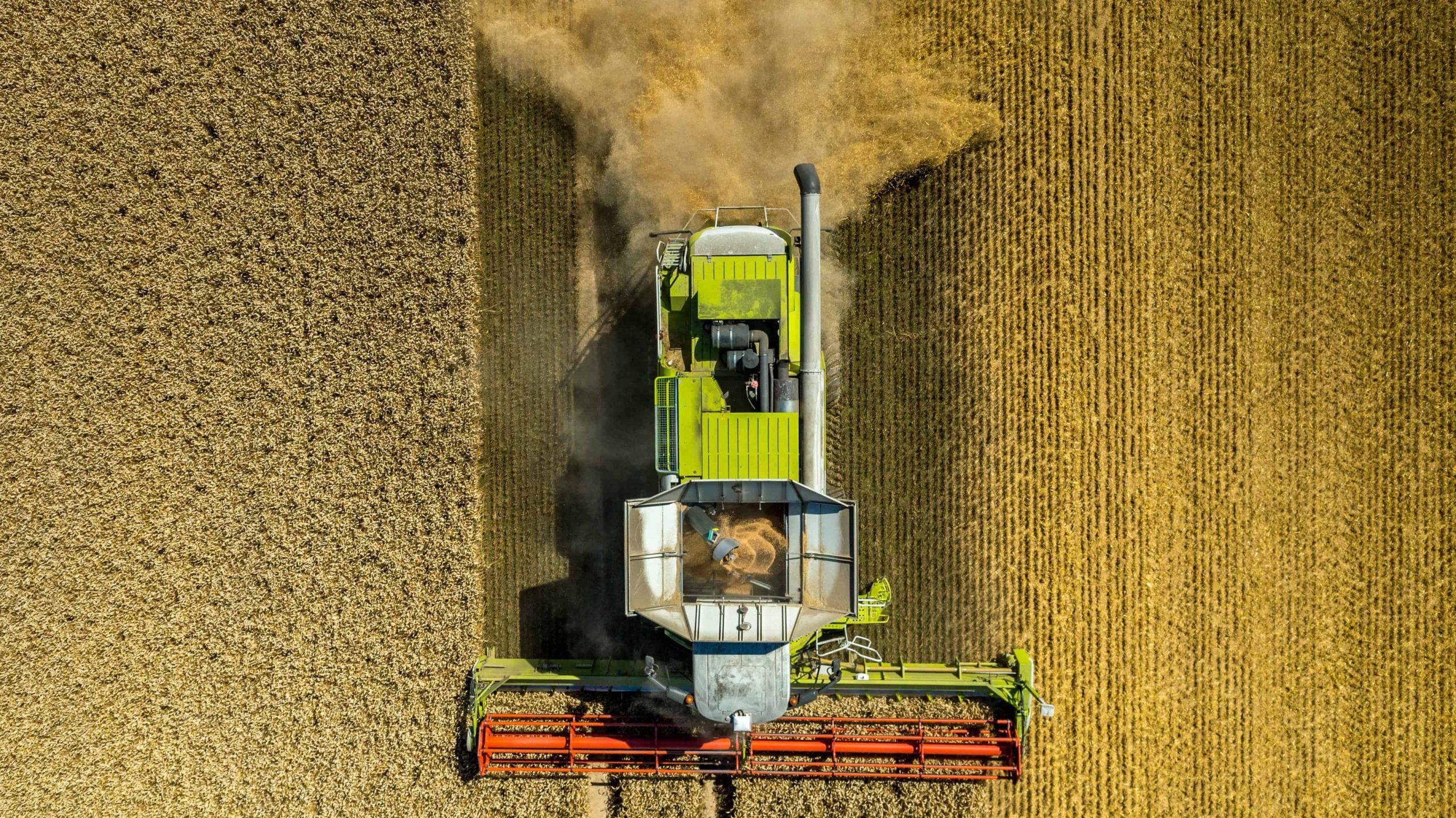 grain, harvest,