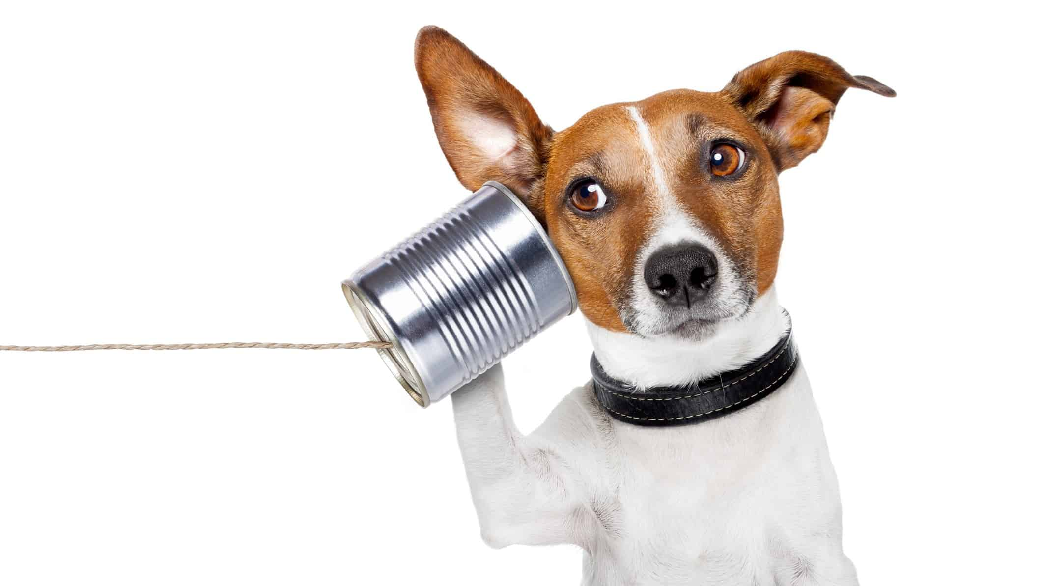 dog listening through tin can with string attached signifying listening regarding asx share demerger announcements