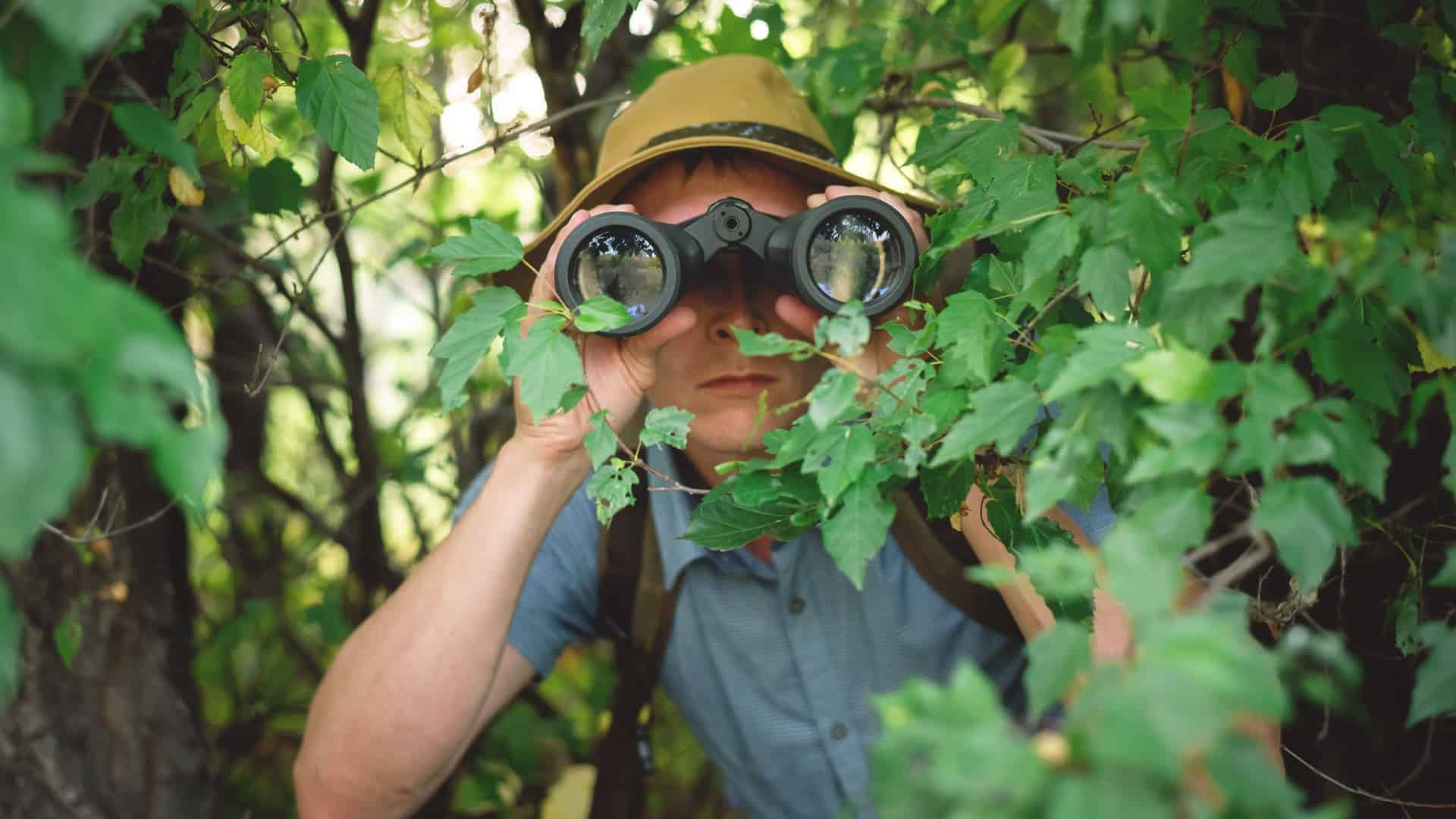 A man with binoculars crouched in the bush, indication a share price on watch