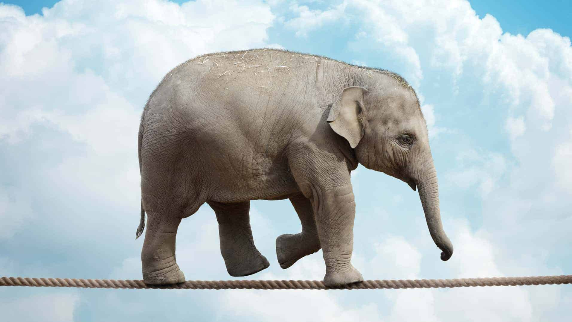 ASX quarterly rebalance represented by elephant walking a tightrope
