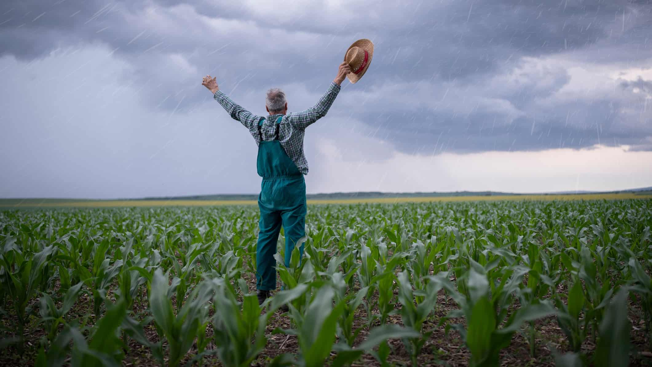 Farmer in field of crops with arms in the air welcoming rain