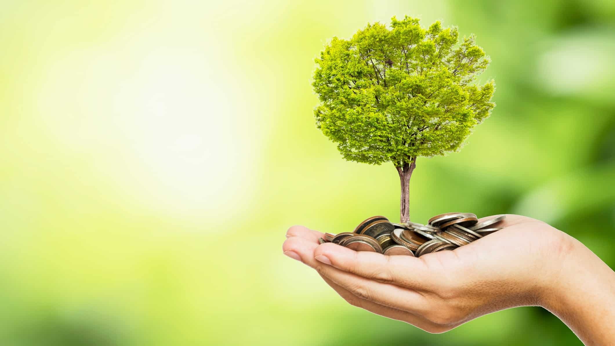 hand holding miniature tree on top of pile of coins signifying growing investment or magellan share price