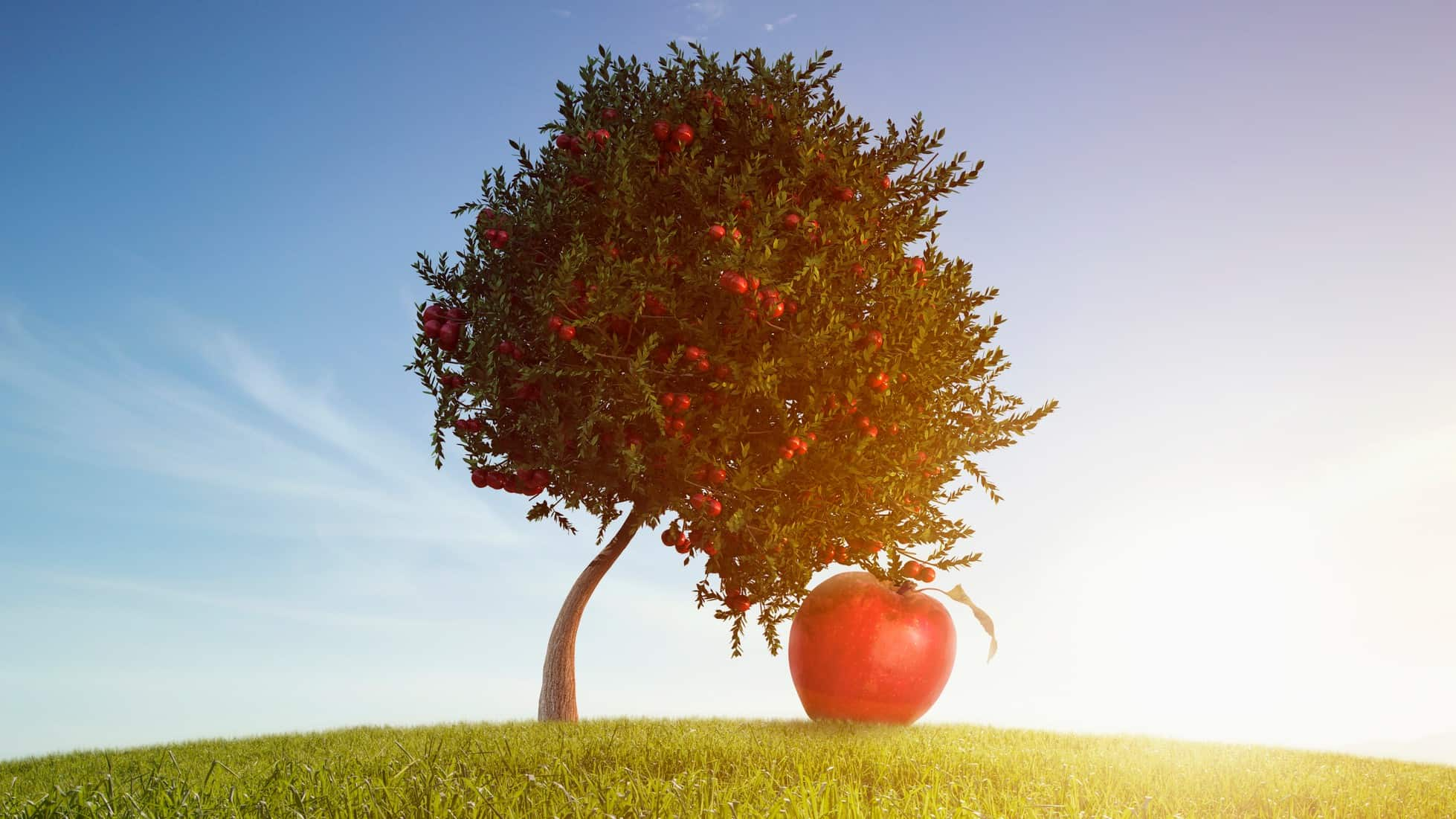ASX share price represented by giant apple having fallen from an apple tree