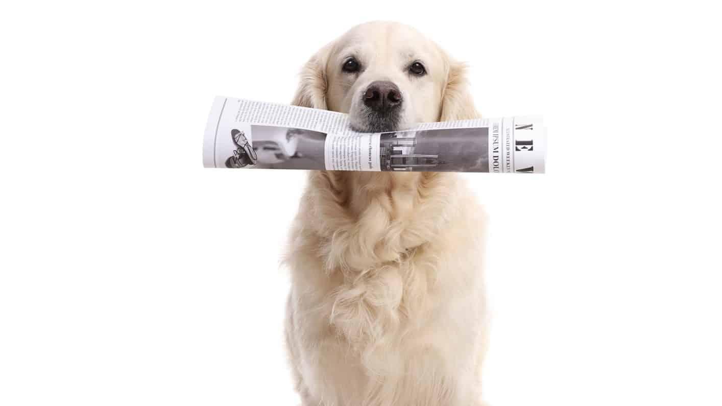 ASX 200 news represented by Labrador dog holding a newspaper