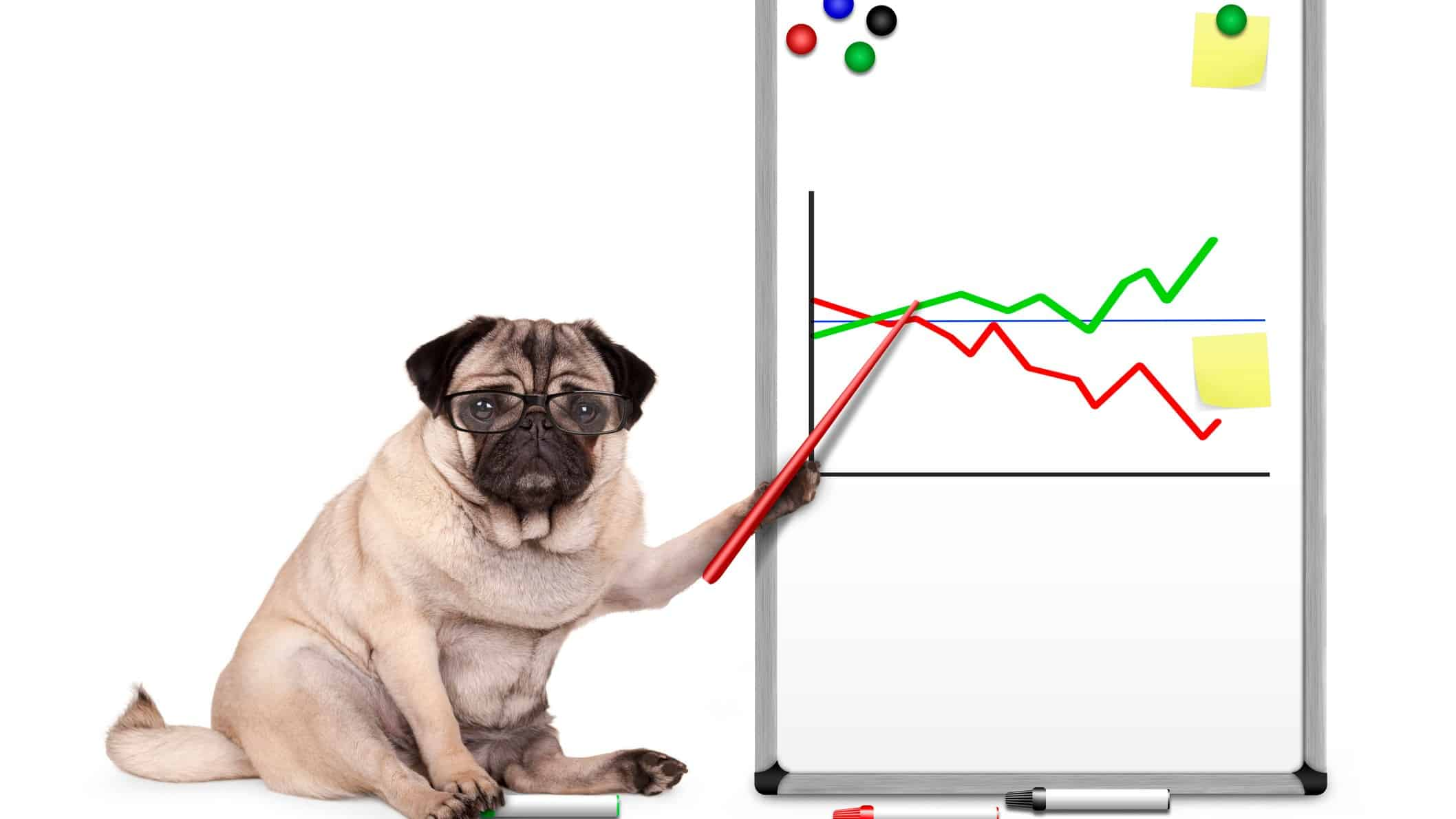 asx 200 share price represented by dog pointing to share price chart