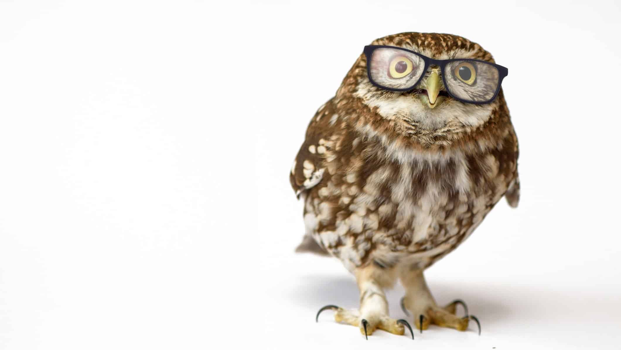 understanding asx share price represented by wise owl wearing glasses