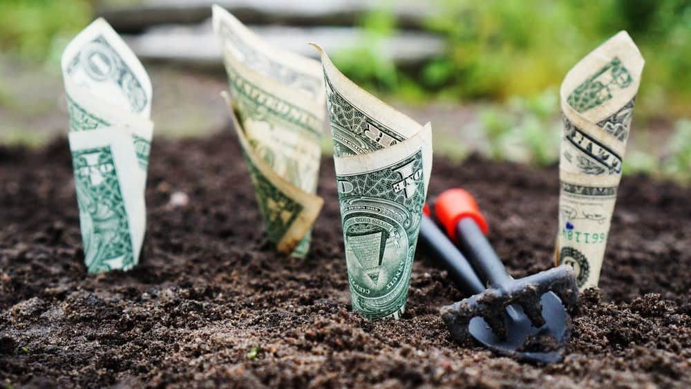 Rolled up banknotes in soil to symbolise wealth growth and dividencs