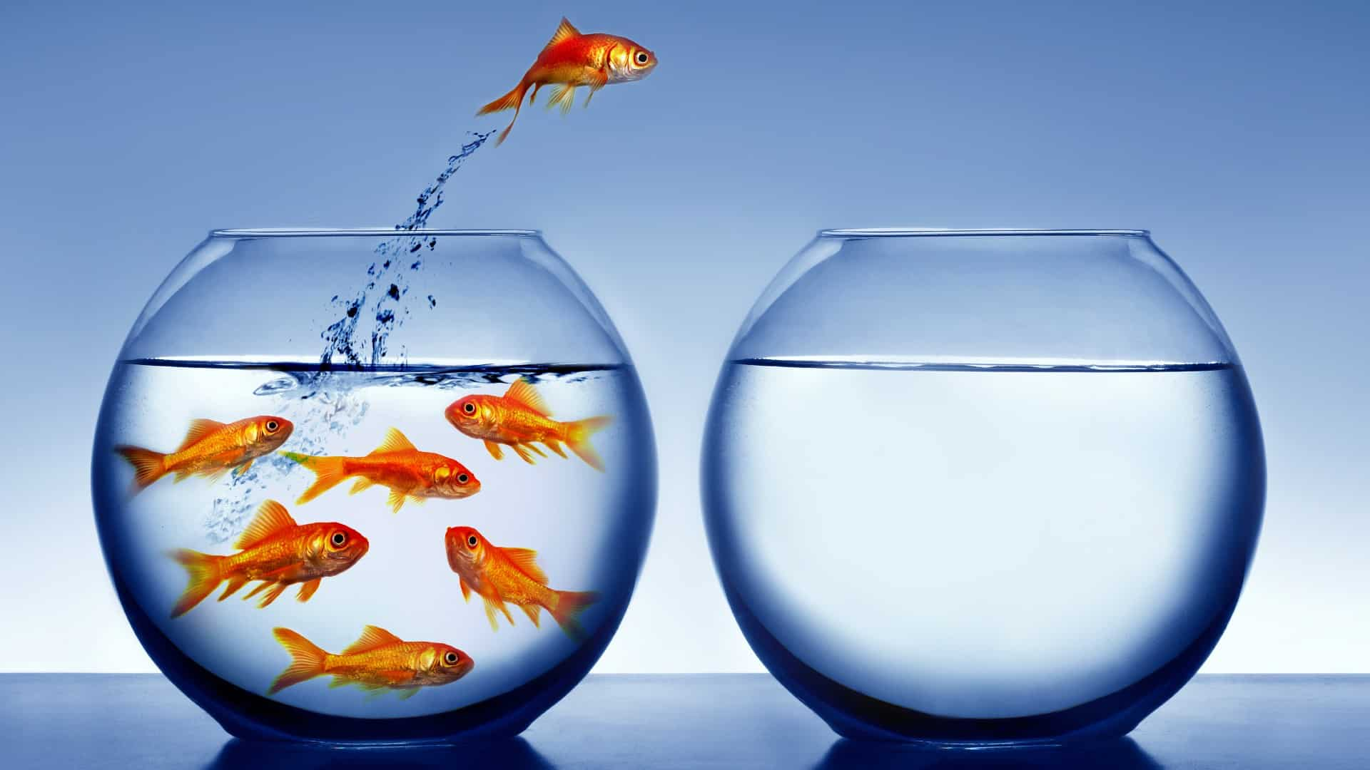 A goldfish jumps out of a crowded fishbowl into another empty bowl, indicating an ASX market leader with a strong share price