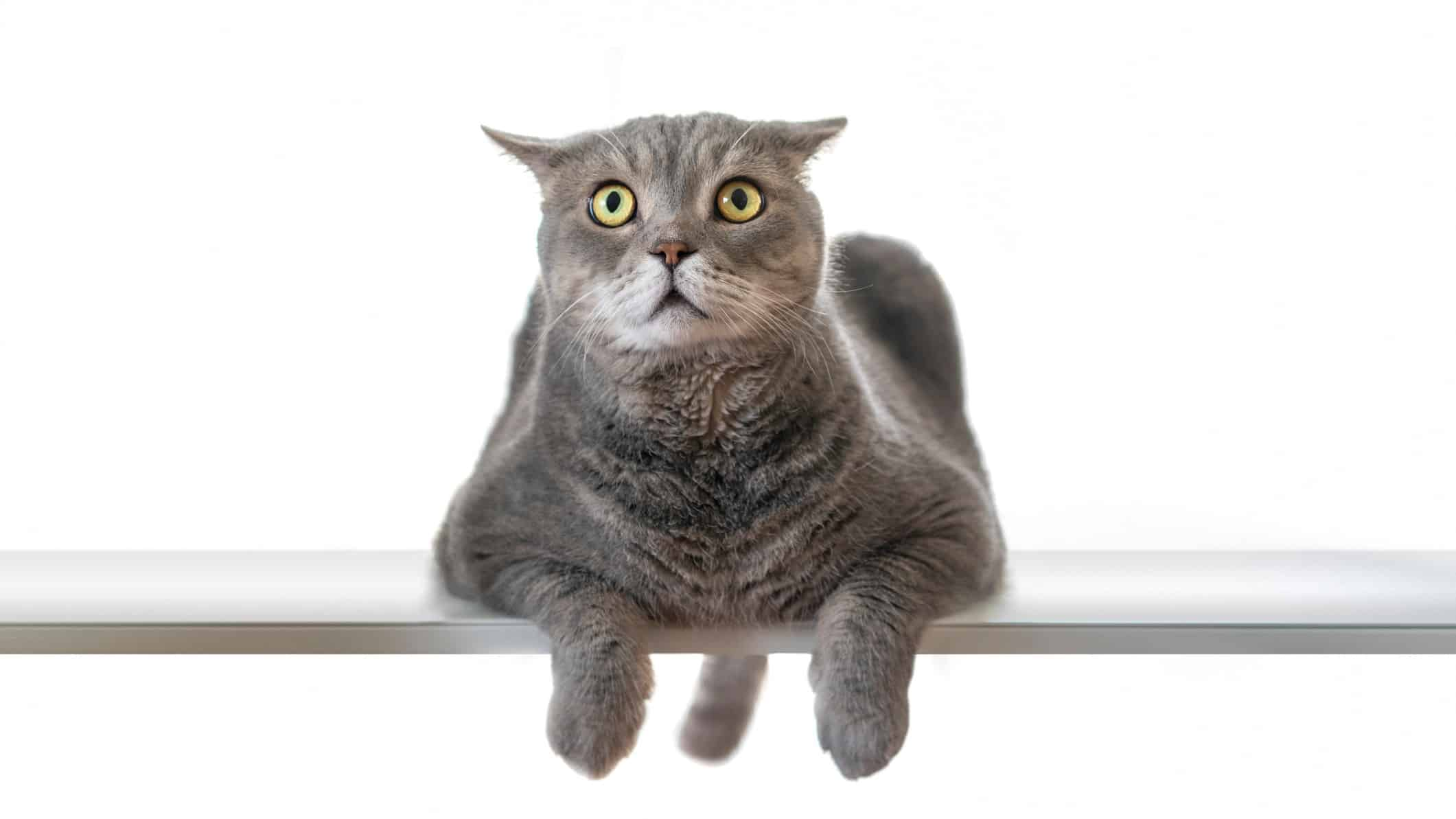 Worried about asx 200 share prices represented by scared cat looking upwards