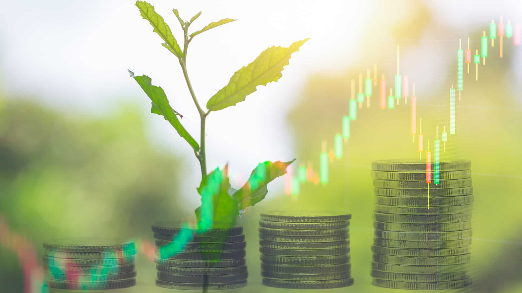 planning growing out of piles of coins, long term growth, buy and hold