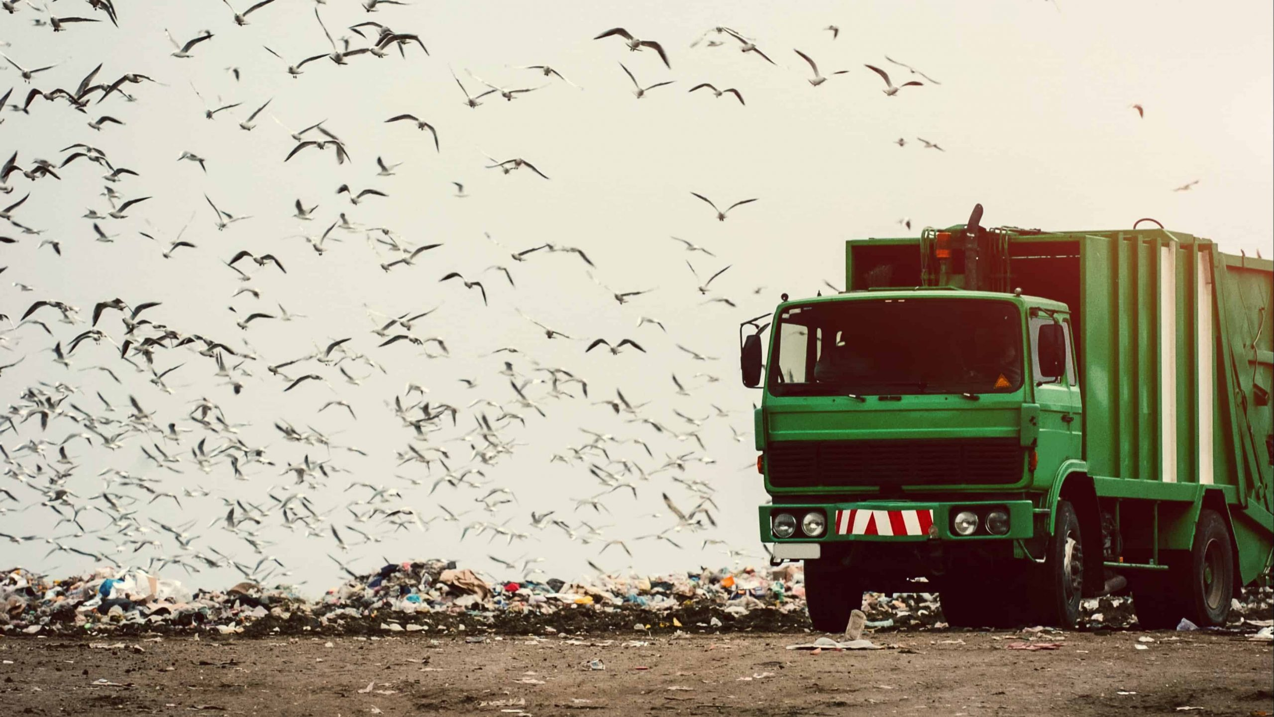 waste management cleanaway share price profit results